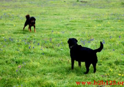 为了弄清流浪狗与野生动物之间的竞争关系